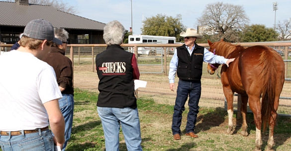 Through educational programs and workshops, Texas A&M AgriLife Extension horse specialists provide research-based best management practices as related to nutrition, breeding, management, care and use.